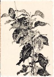 Houseplant , 1999. Sumi ink on paper, 60 x 42 cm