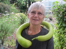 GROWER CONSTRICTOR, Helen, September 2015